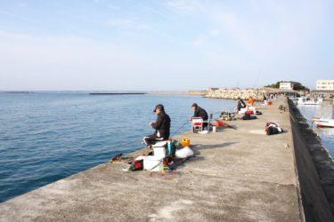 フィールドガイド 南部堺漁港