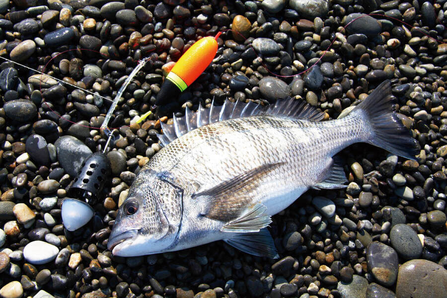 七里御浜カゴ釣り3