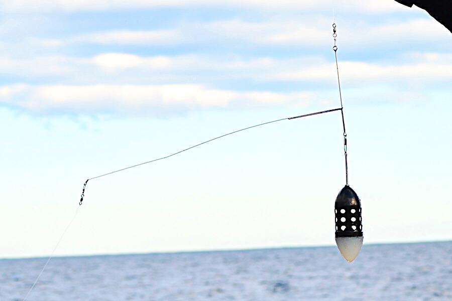 七里御浜カゴ釣り7