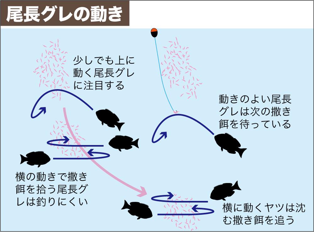 尾長グレ作法2-7