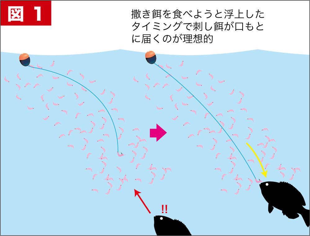 グレ釣り一直線尾長グレ11-6