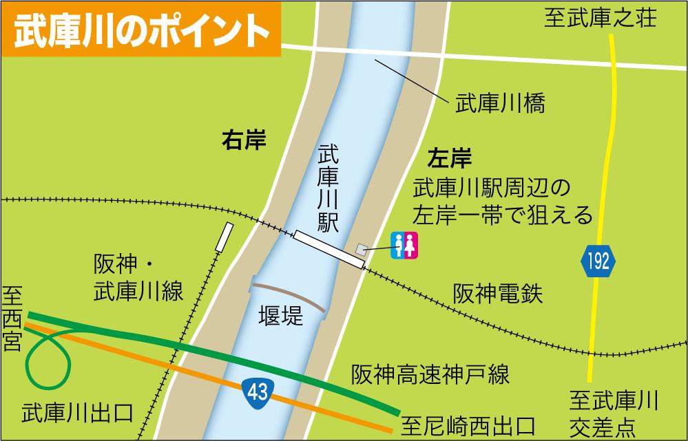 公共交通3武庫川テナガエビ13