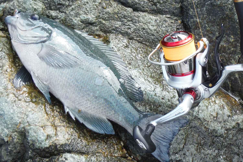 ゆかぼんの釣りに夢中 南紀・袋10