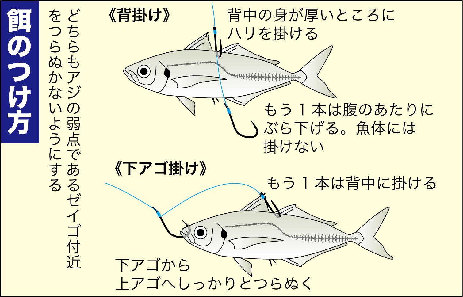 投げ釣りアコウ8