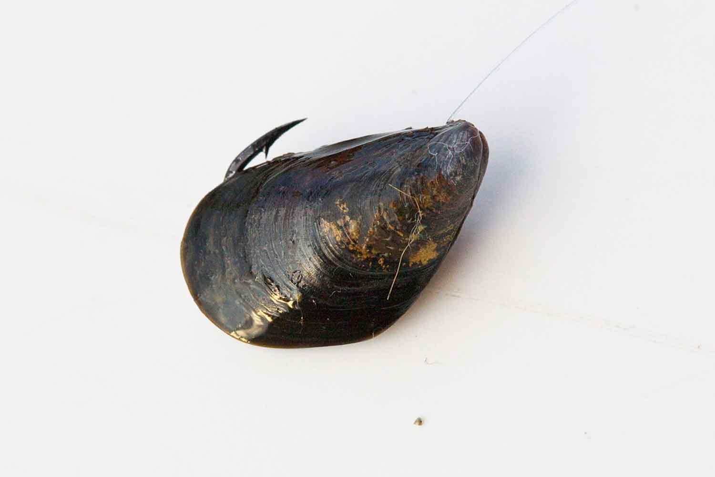 チヌ落とし込みスライダー釣法3