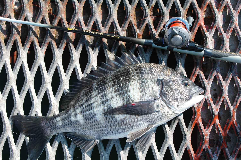 尼崎市立魚つり公園8