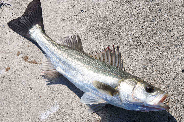大阪南港魚つり園5