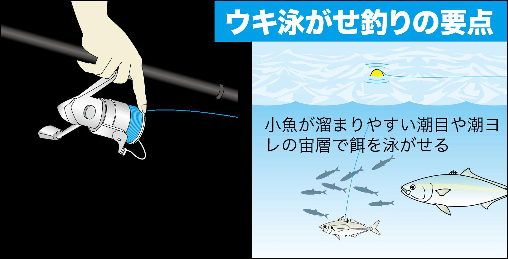 ハマチ(ブリ)の釣り方25