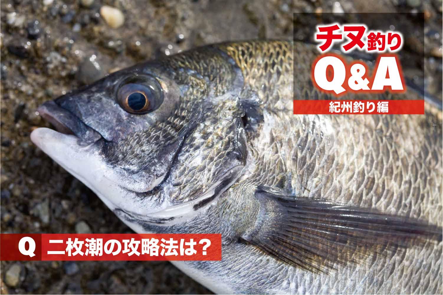 チヌQA紀州釣り二枚潮1