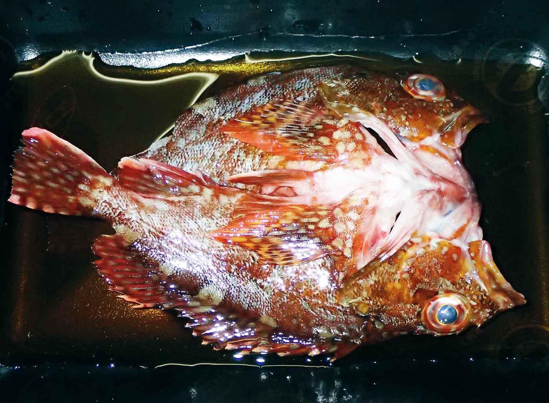 釣魚メシ34