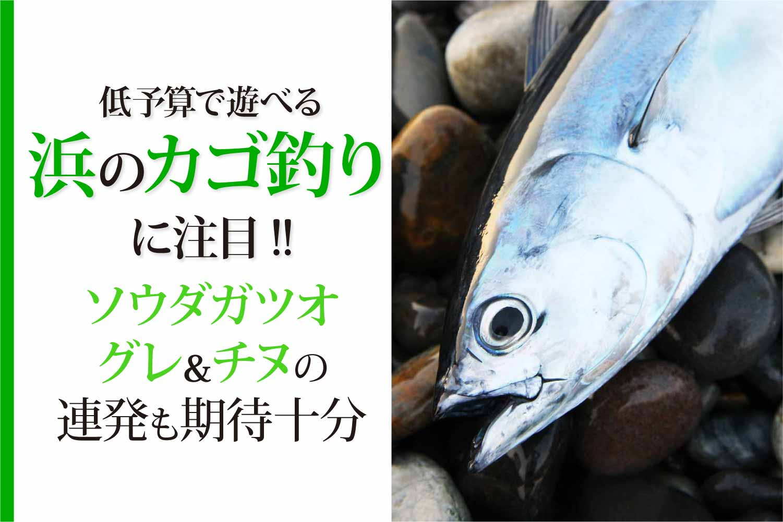カゴ釣りカツオ・グレ・チヌ6