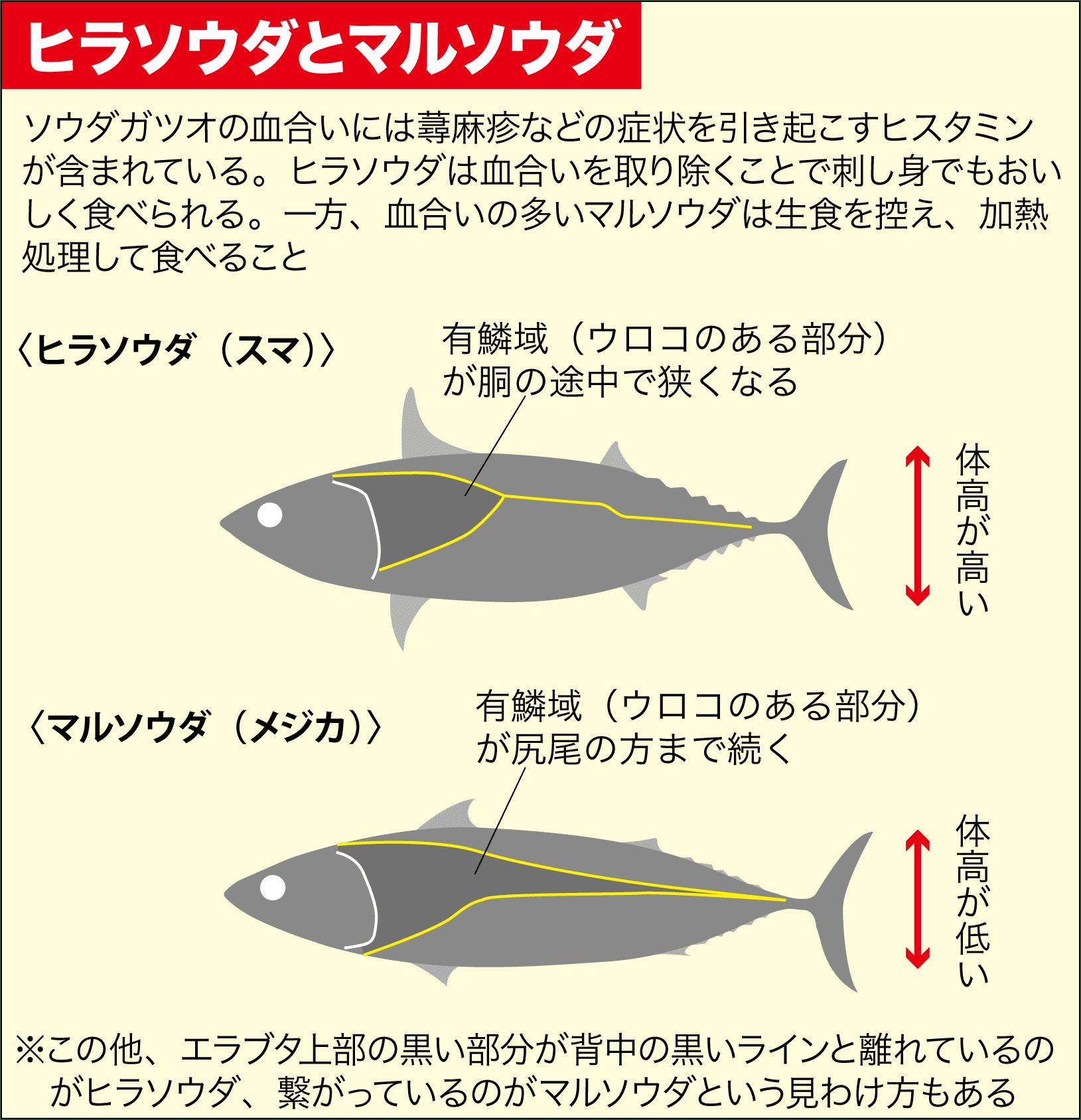 カゴ釣りカツオ・グレ・チヌ5