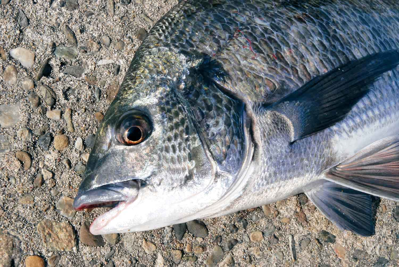 年末年始大釣り七里御浜、尾鷲港4