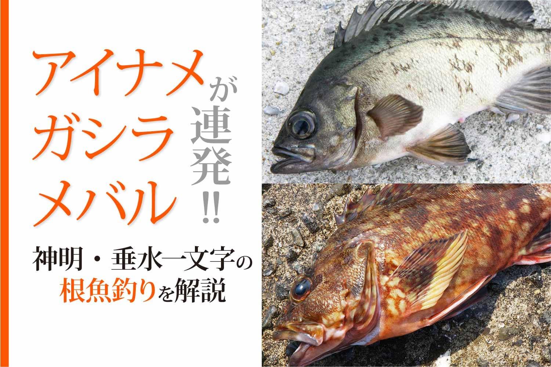 垂水一文字根魚11