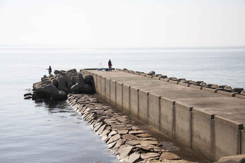 フィールドガイド 灘浜1