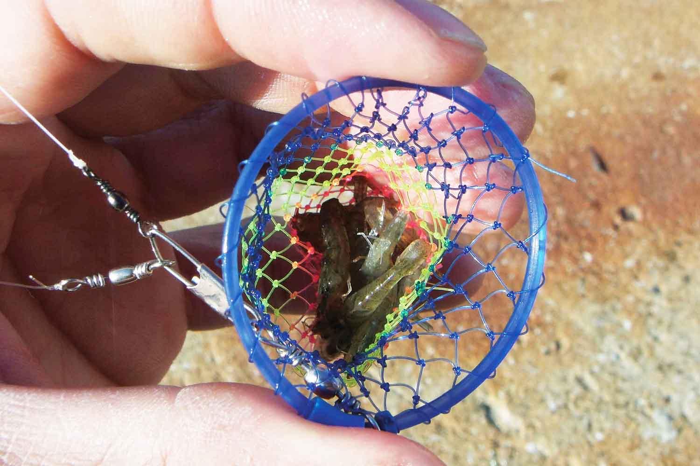 お手軽カゴ釣り2洲本港メバルガシラ7