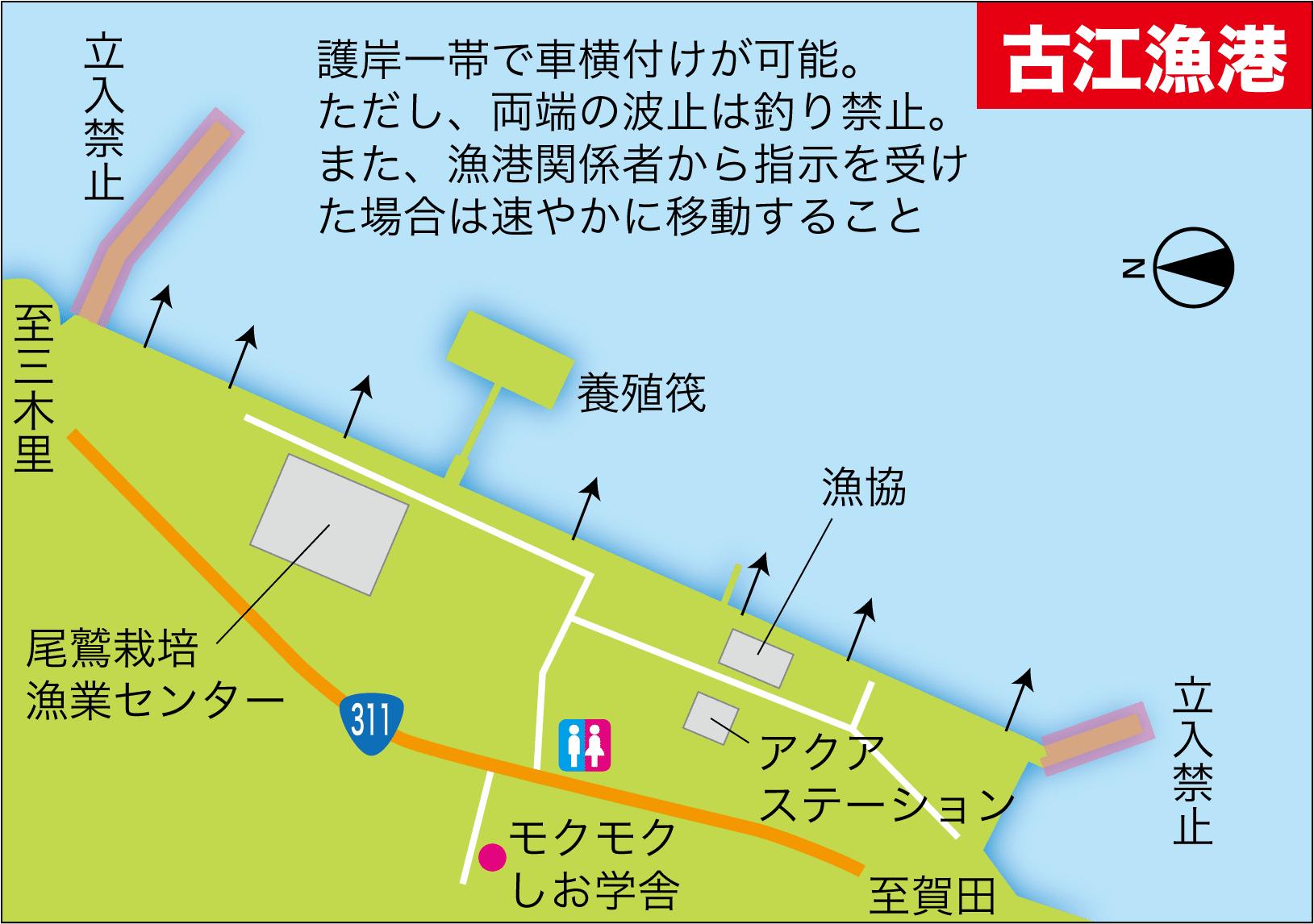 チヌ&アオリイカ大物2-12