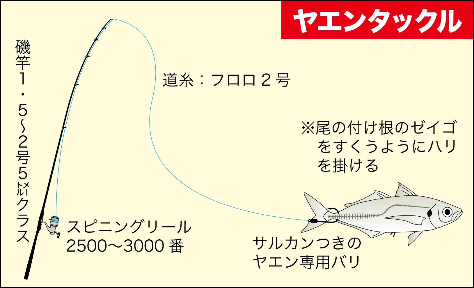 チヌ&アオリイカ大物2-13