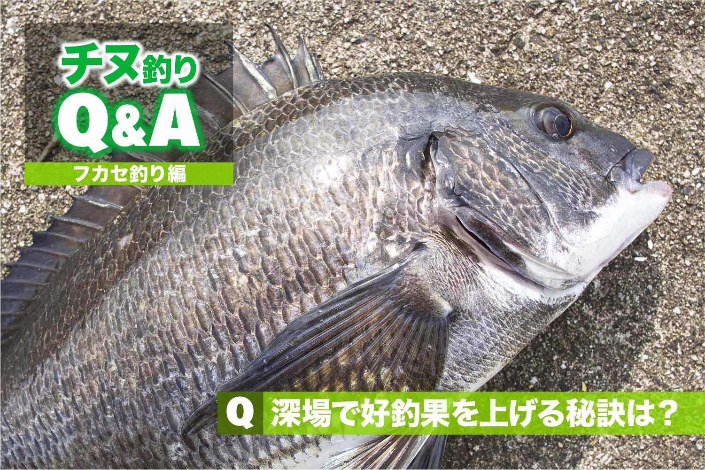 QAフカセ深場の攻略6