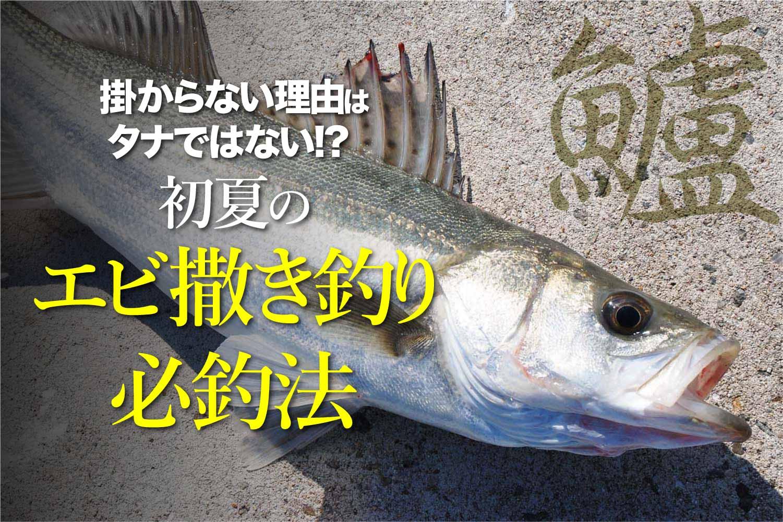 スズキエビ撒き釣り必釣法11