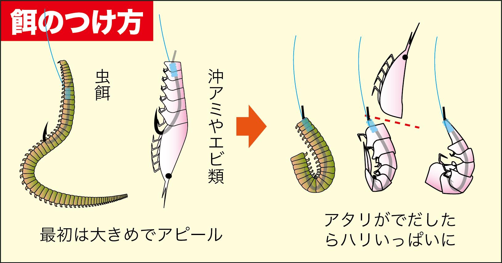 イシダイ(サンバソウ)の釣り方2