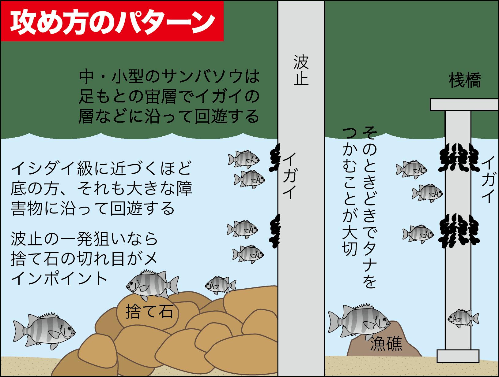 イシダイ(サンバソウ)の釣り方4