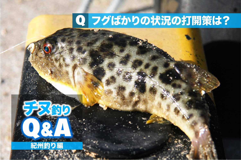 紀州釣りフグ対策1