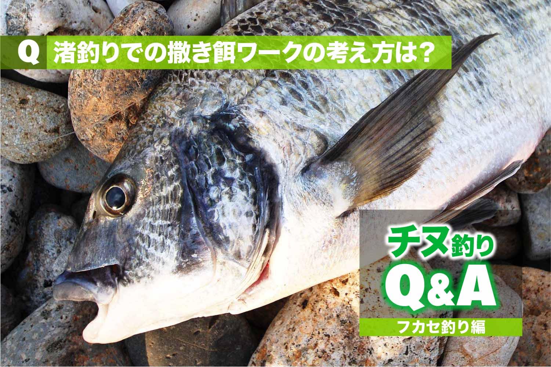 QA渚釣り撒き餌1