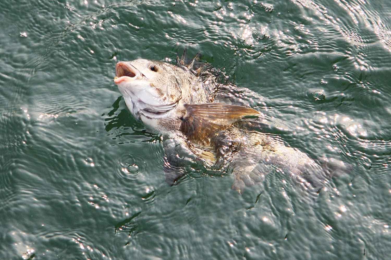 QA紀州釣りライン選択2