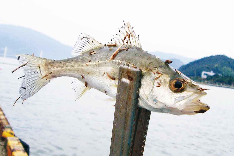 のべ竿大漁4-舞鶴7