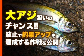 大アジ狙いのチャンス!! 波止で釣果アップを達成する作戦を公開