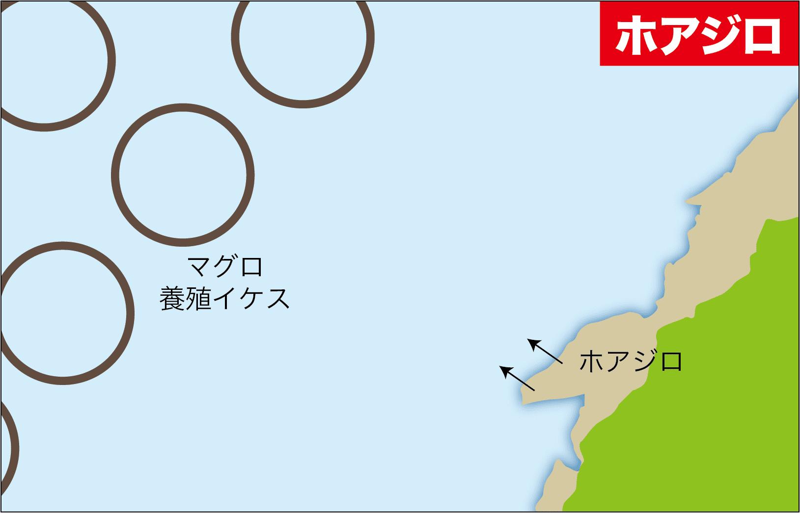キャスターズ串本カワハギ15-20