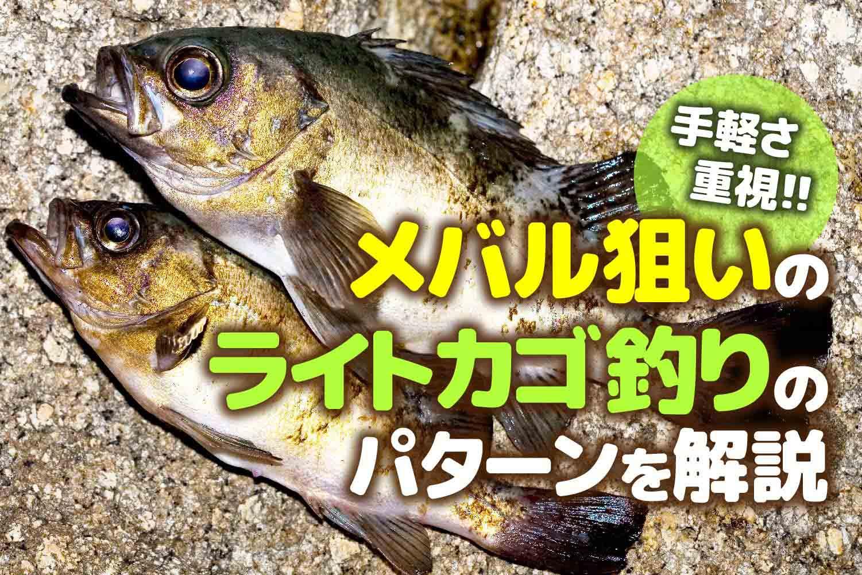 カゴ釣りメバル1