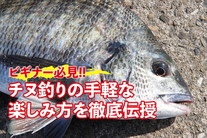 釣り チヌ