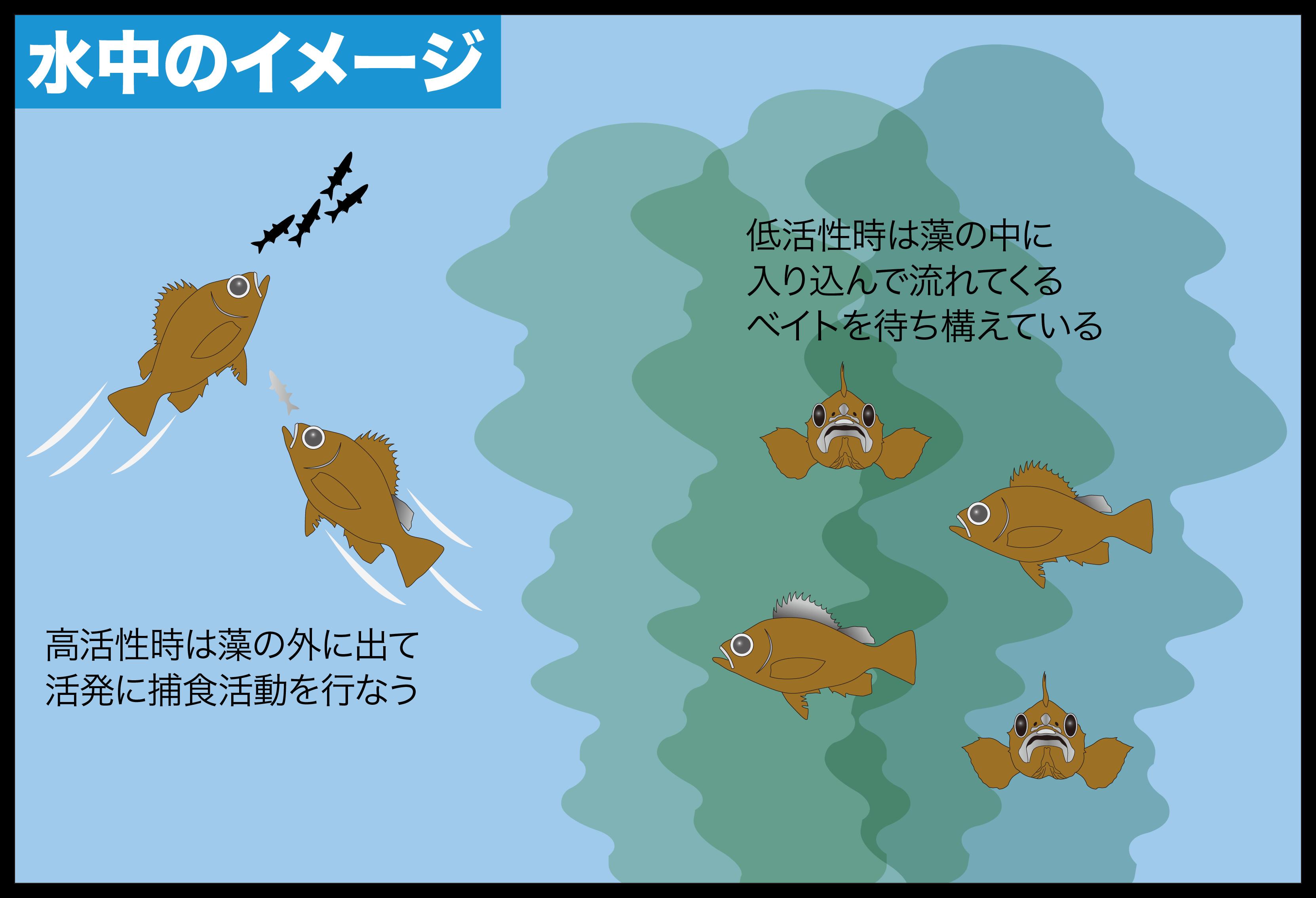 メバリング 藻場攻略2