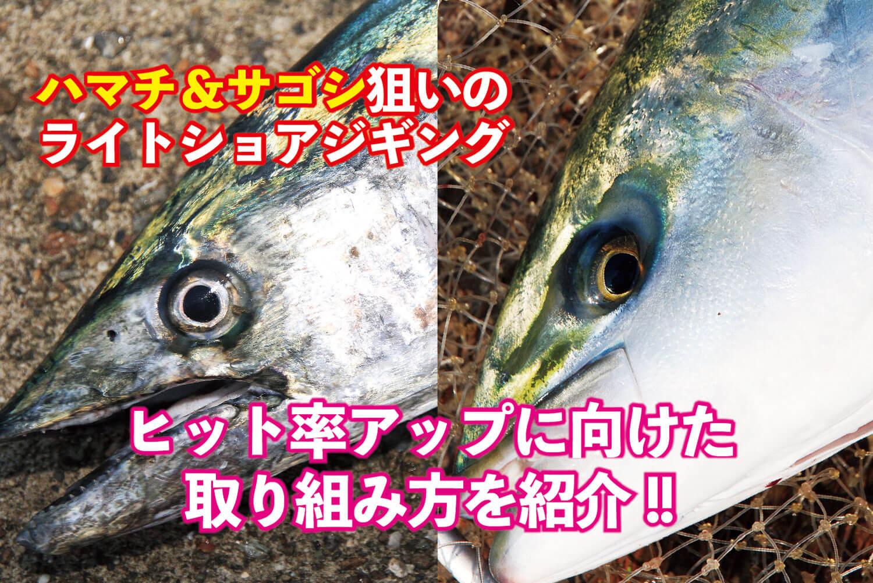 ライトショアジギング・サゴシ・ハマチ1