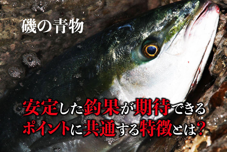 ショア青物(ヒラマサ・ブリ)・ポイント1