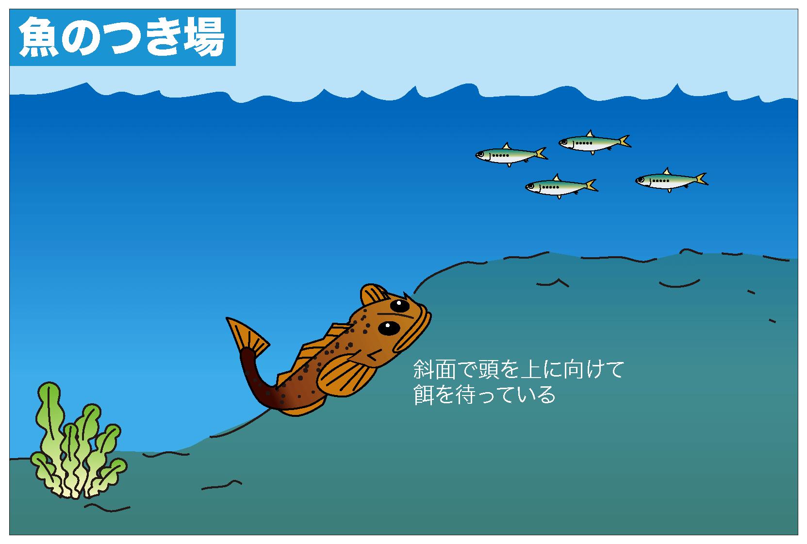 マゴチ 釣り方2