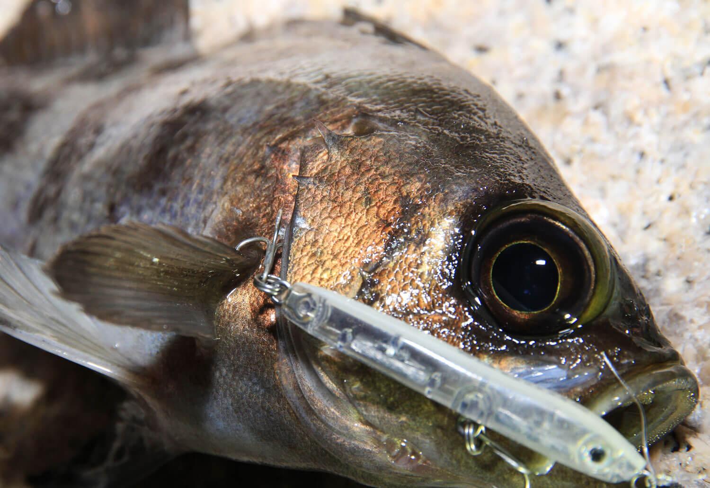 冬のメバル釣り ジグヘッド4