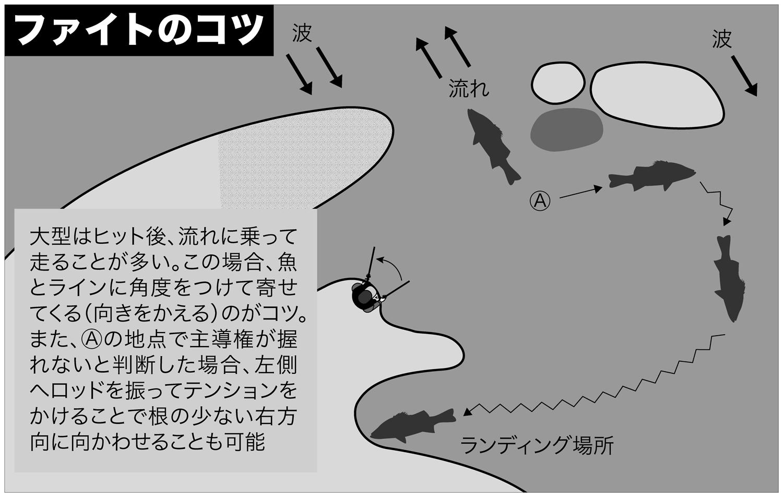 ヒラスズキ 釣り方14-2