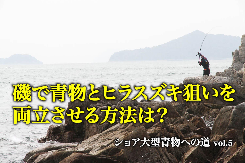 大型青物 ヒラスズキ1