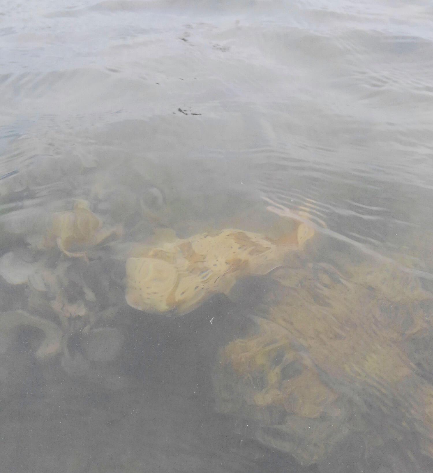 沖縄の釣り メッキ・ロウニンアジ3