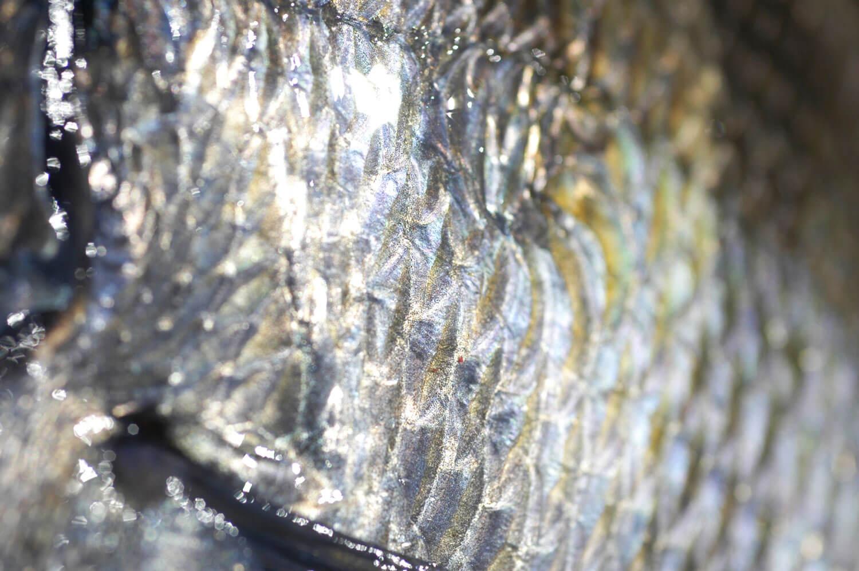 釣り・魚・リリース方法2