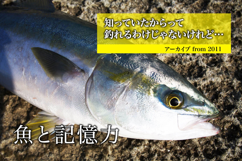 魚の記憶力・アジ1