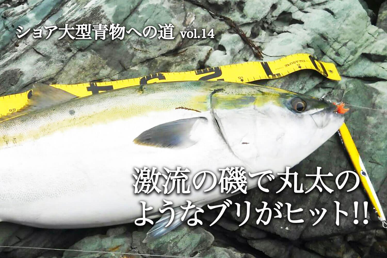 磯の青物釣り・寒ブリ1