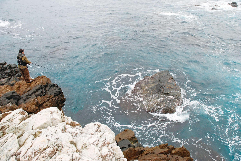 海鳥・釣り・ナブラ2