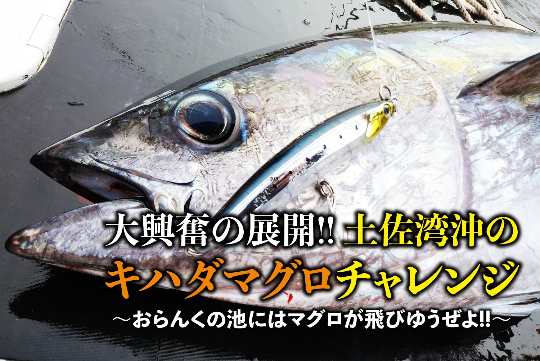 キハダマグロ・高知県土佐湾沖1