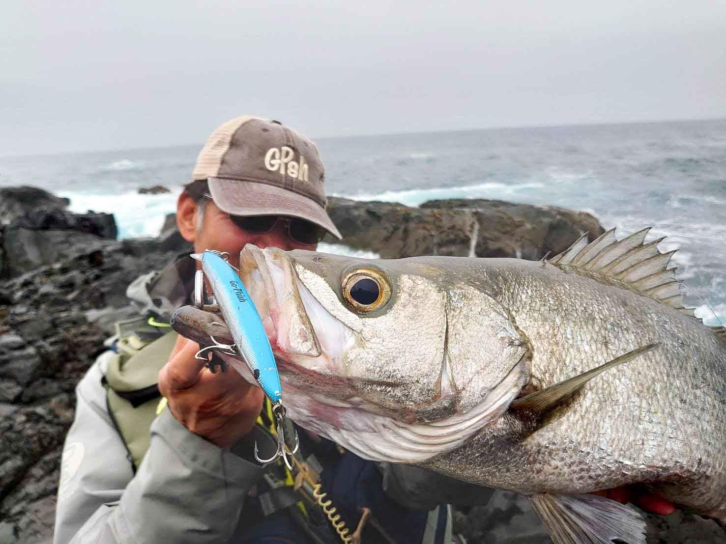 春のヒラスズキ釣り